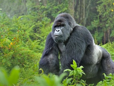 The worlds most endangered animals